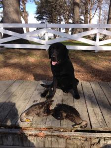 Two blacks ducks for these two hunter's in North Carolina and a Good Day for Sarge